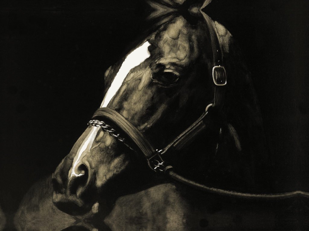Wall - Pinto Horse on black background2