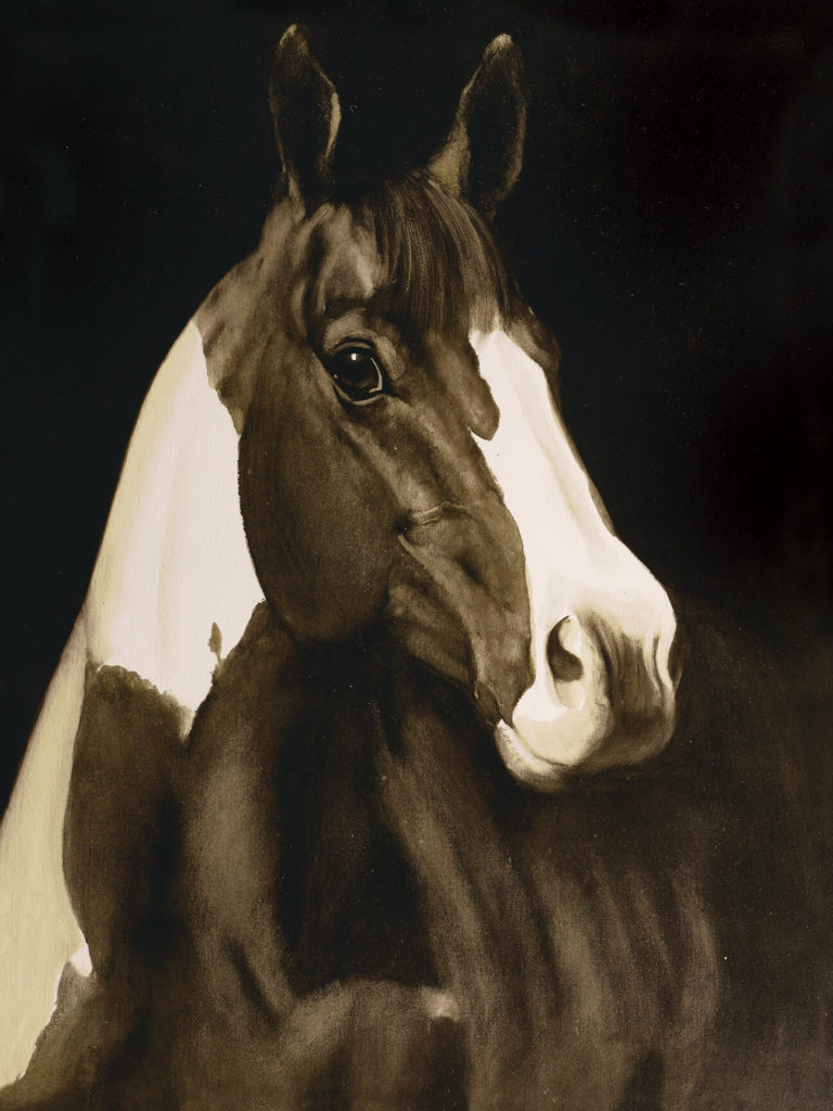 Wall - Pinto Horse on black background